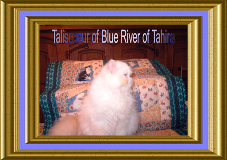 - Taliscoeur of Blue river