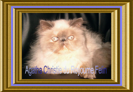 - Agatha Christy du Royaume Felin