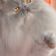 Chapy Cat\'s