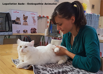 chat felin maladie ostéopathie